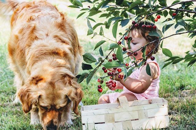 holčička se psem pod třešní